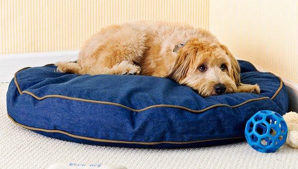 d219702e6ca4 Στο online pet shop μας μπορείτε να ανακαλύψετε μια μεγάλη ποικιλία σε  αξεσουάρ για τον σκύλο σας