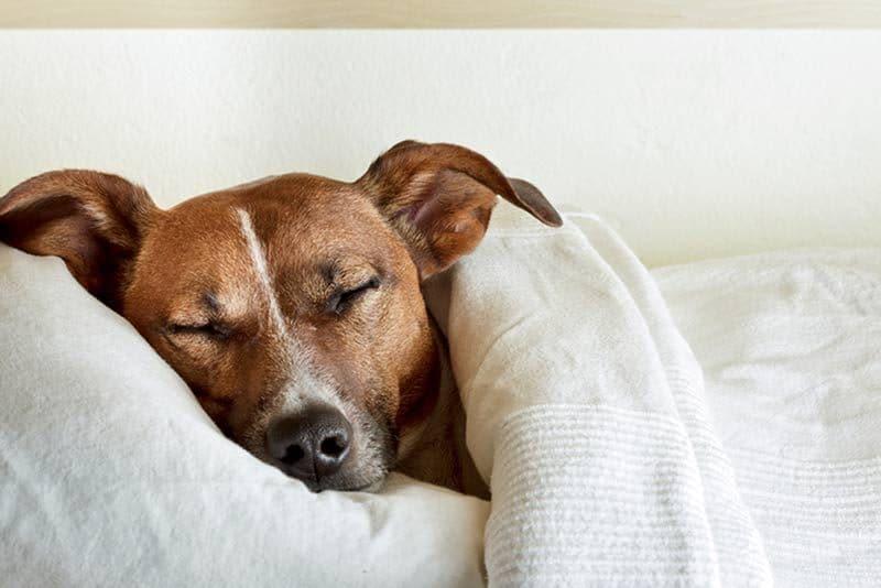 Πόσες ώρες τη μέρα πρέπει να κοιμούνται τα σκυλιά;